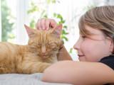 Le Chat et l'Enfant