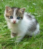 problèmes de concentration ? Regardez des photos de chatons !