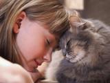 Les 10 races de chats qui aiment le plus les enfants