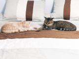 Cohabitation entre Chats