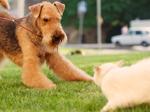 La cohabitation chien et chat