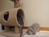 Quand un chat s'amuse avec un lapin