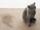 La malpropreté chez le chat : les causes