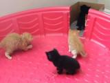 Quand apprendre la litière aux chatons