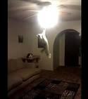 Ce chat veut atteindre  la lumière