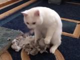 Un chat se défoule sur un rouleau de papier
