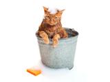 La malpropreté du chat : pourquoi mon chat est-il malpropre ?