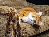 Pourquoi mon chat dégrade mon intérieur, et comment y remédier ?