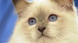 Comment le chat alerte son maître pour sa pâtée