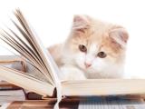 formation sur les comportements du chat