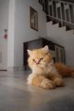 Le chat des villes a-t-il plus de troubles du comportement que le chat des champs?