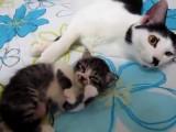 Une mère très protectrice avec son chaton