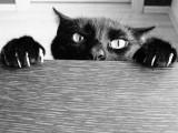 Empêcher son chat de faire ses griffes n'importe où