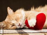 L'affection chez le chat : mon chat m'aime t-il ?