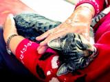 10 races de chats sociables