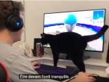 Que se passe-t-il dans la tête d'un chat