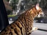 Un Safari qui n'aime pas être enfermé