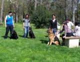 Donneville (31) Ils apprennent à éduquer chiens et chats