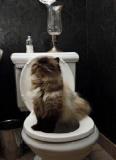 Charlie est un chat bien élevé.