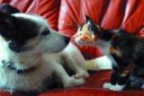 Les récompenses, l'une des clefs de la domestication du chat