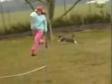 Un chat fait de l'agility !