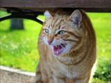 Comprendre et éviter l'agressivité chez le chat
