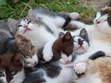 Les Chats et leurs Compagnons Félins
