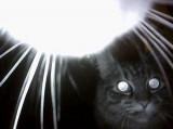 Le Chat : Un sérial killer méconnu