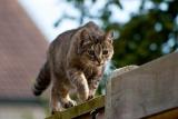éradiquer les chats pour sauver les oiseaux