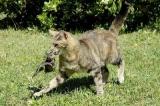 La Zürcher Tierschutz lance la politique du chat unique