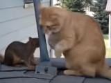Un chat joue avec un écureuil