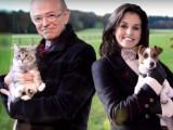 Chien contre chat: qui est le meilleur?