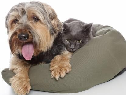 Les conditions d'une bonne cohabitation entre un chat et un autre animal
