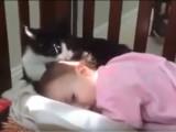 Chat et bébé dans le même berceau