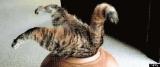 15 chats plus aventureux que vous