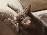 Chat qui détruit tout : le comportement destructeur des chats