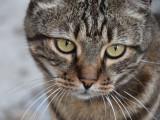 Le maître, responsable des problèmes comportementaux et de santé du chat ?