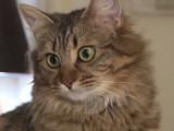 Que faire avec un chat possessif