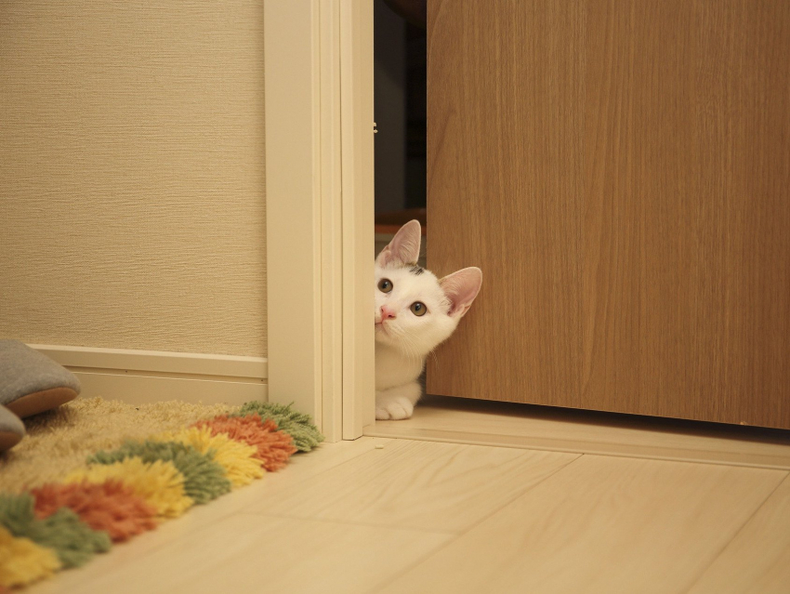 Mon chat m 39 emp che de dormir causes et solutions - Comment empecher un chat de gratter a la porte ...