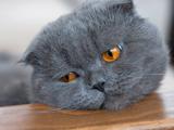 Chat dépressif : comment le savoir et comment le guérir ?