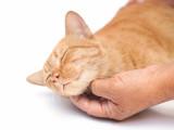 Le ronronnement du chat : le langage félin qui fait du bien à l'être humain