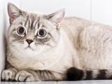 Le stress chez le chat : comment savoir si mon chat est stressé ?