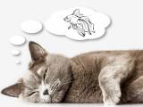 Penser comme un chat