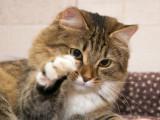 Les attitudes corporelles du chat