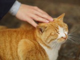 Votre chat ne serait-il pas en manque de caresses?