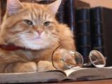 Comment stimuler mentalement son chat et le rendre plus intelligent ?