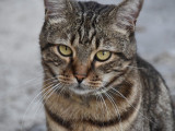 Mort du propriétaire : le chat face au décès de son maître