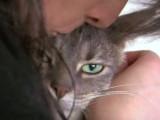 Préparer un déménagement avec un chat