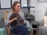 Analyse du comportement du chat