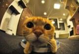 Japon : La fin des « cafés à chats » ?...